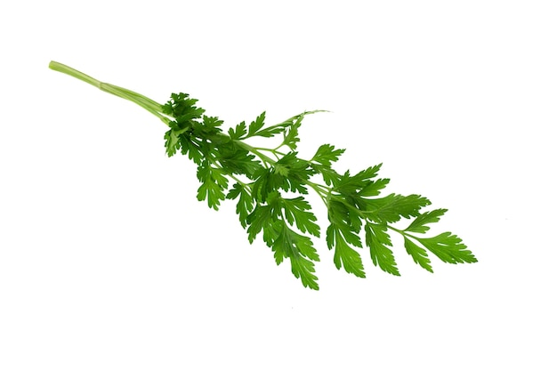 白い背景で隔離のパセリの葉。新鮮な有機パセリハーブの葉。パセリ支店。緑色の葉。