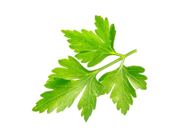 Parsley. one leaf isolated on white background