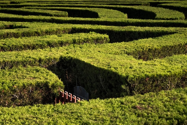 Part of garden maze