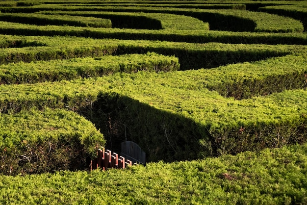 Part of garden maze