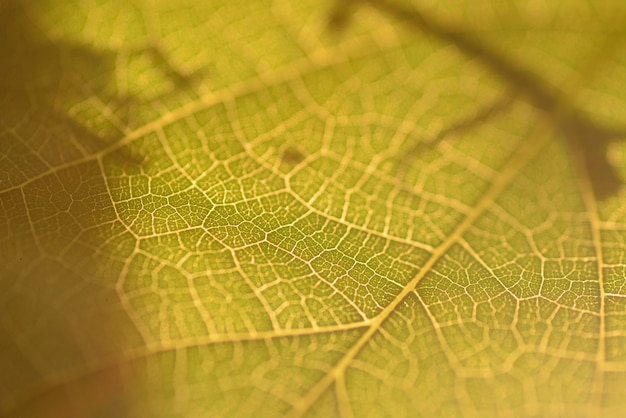 Part of green leaf closeup