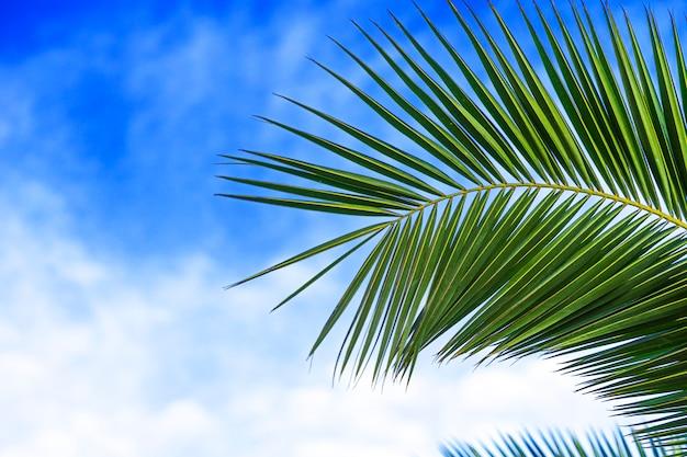 Часть зеленых пальмовых листьев на фоне облачного неба
