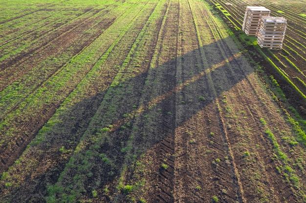 保育園の観葉植物の一部です。造園で使用するための販売用の芝生を育てるフィールド。