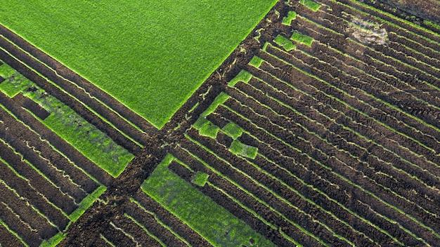 Часть питомника декоративных растений. поле для выращивания газона для продажи, для использования в ландшафтном дизайне.