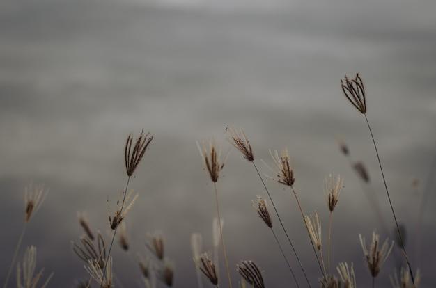 Частично сфокусированные деревья травы с запачканным озером.