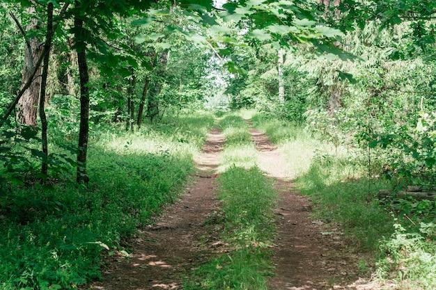 Частично размытое творческое фоновое изображение песчаной тропы в летнем лесу среди травы и деревьев