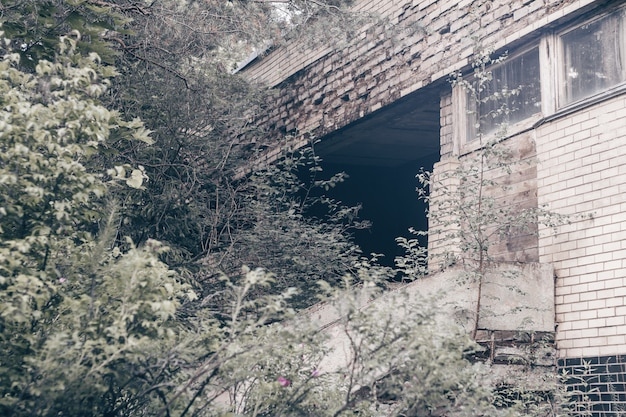 Partially blurred gray concrete and brick wall of abandoned ruined building overgrown with trees, bushes, moss and green branches