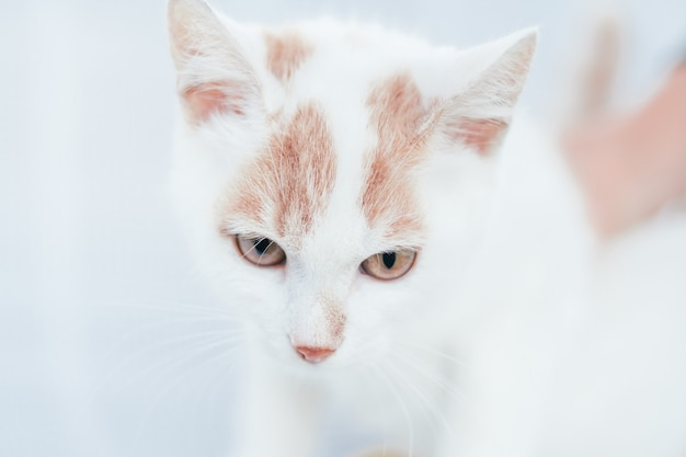 Частично размытая морда бело-рыжей кошки - глаза и нос на белом фоне, выборочный фокус