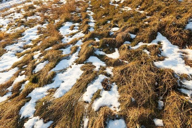 부분적으로 농업 분야에 눈이 마른 잔디로 덮여 있습니다. 가까이 촬영.