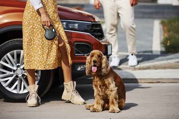 車の近くの屋外で犬と一緒に散歩している素敵なカップルの粒子ビュー。