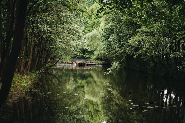 Pasig 아름다운 녹색 숲, 물에 반사 된 다리