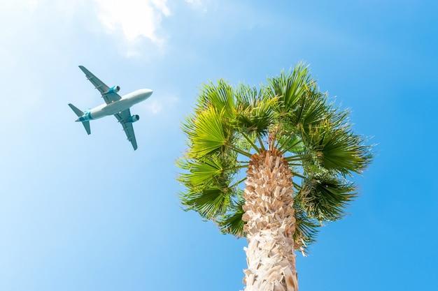 푸른 하늘에 대 한 야자수 위에 비행하는 여객기