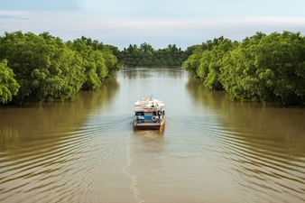 Passenger boats are sailing in rivers surrounded by forests.