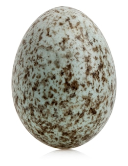 Домашнее яйцо воробей (passer domesticus)