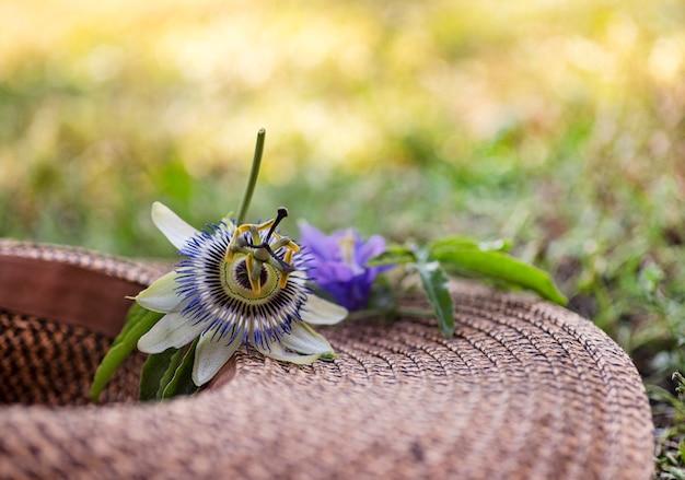 여름에 자연의 열정 꽃과 모자