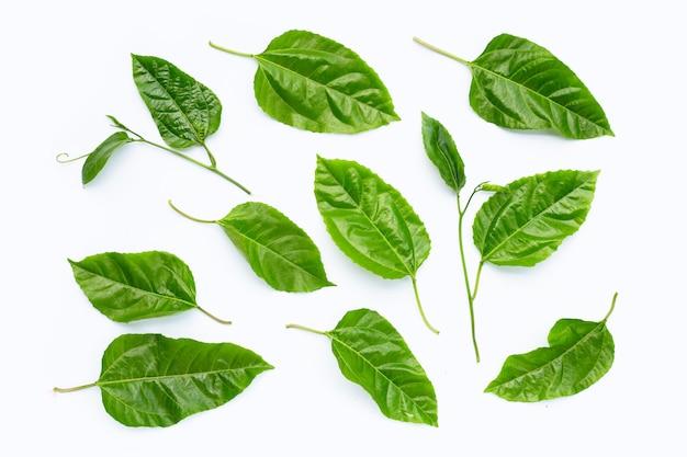 Листья маракуйи на белой поверхности
