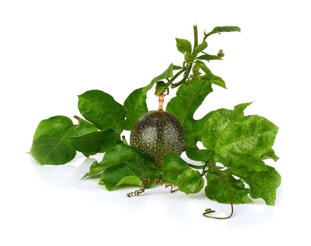 Passion fruit or passiflora edulis, common passion fruit, jambhool fruit, passion fruit