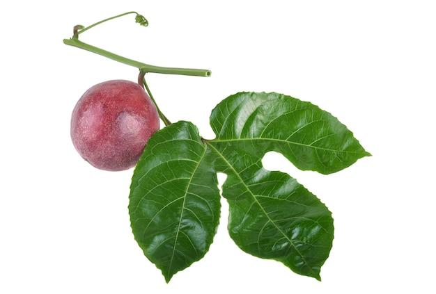 흰색 배경에 고립 된 리프와 열정 과일입니다.