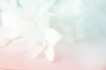 Pastel color orchid flowers in soft and blur style.Vintage background.