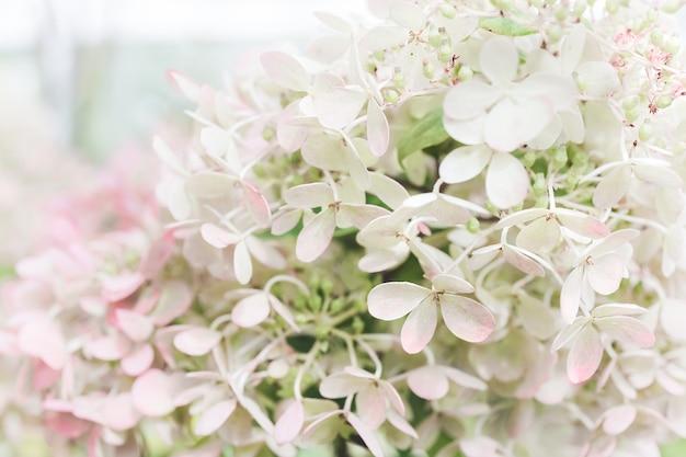 白いアジサイの花のパステル自然な背景。白、ピンク、ミントの色。クローズアップアジサイの花びらと花。花のオルテンシアの背景
