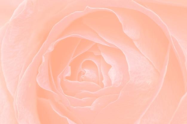 Пастельный оранжевый цветочный узорчатый фон