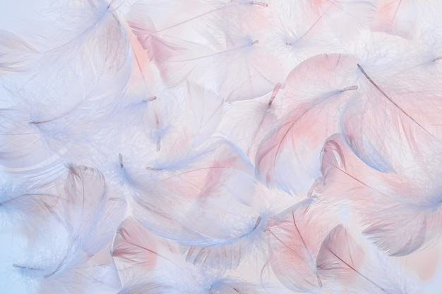 Pastel pink and blue feathers texture background.