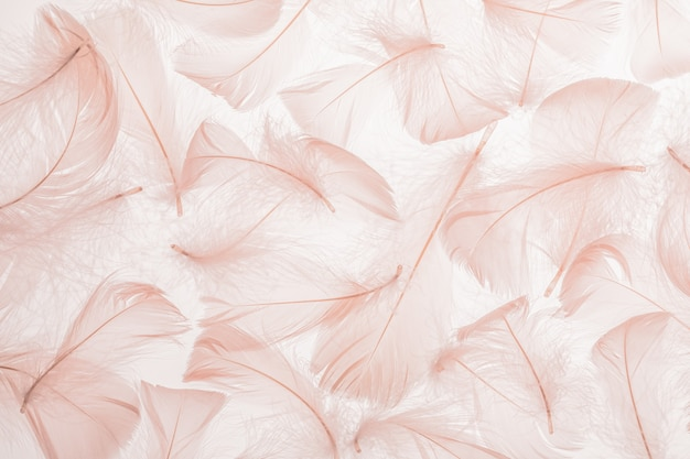 Pastel pink feathers texture background.