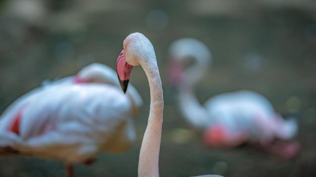 Pastel pink flamingo