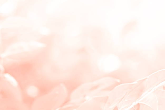 Pastel pink orange beautiful spring flower bloom branch background with free copy space