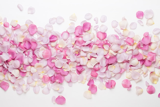Pastel rose flowers petals isolated