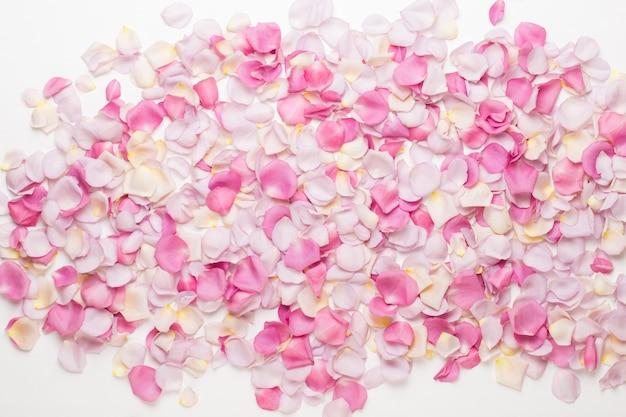 パステルバラの花の花びらを分離