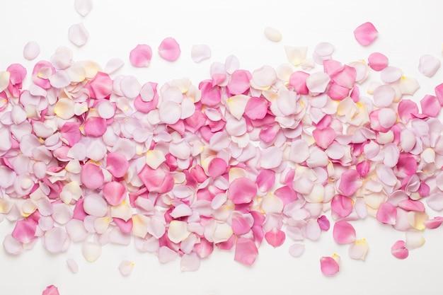 白い背景の上のパステルバラの花の花びら。フラットレイ、上面図、コピースペース。