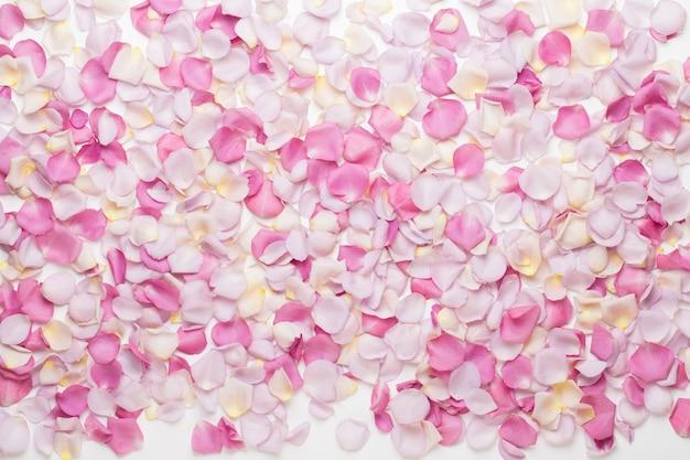 흰색 바탕에 파스텔 장미 꽃 꽃잎입니다. 평면 위치, 평면도, 복사 공간.