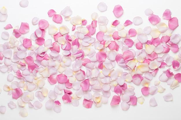 白い背景の上のパステルバラの花の花びら。フラットレイ、上面図。