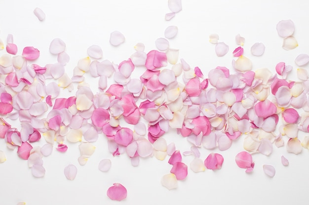 Пастельные лепестки цветов розы на белом пространстве. плоская планировка, вид сверху, копия пространства.