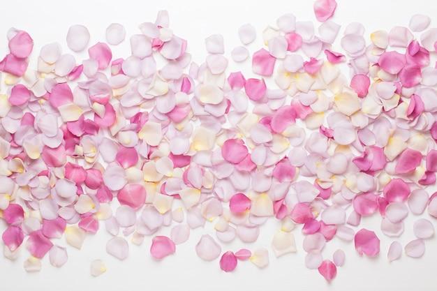 白い表面にパステルバラの花びら。フラットレイ、上面図、コピースペース。