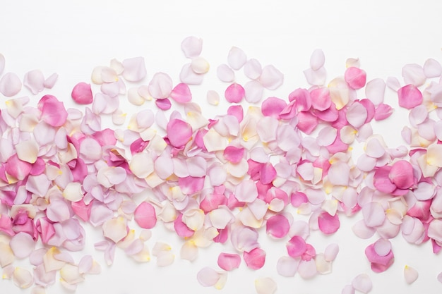 Pastel rose flowers petals on white background. flat lay, top view, copy space.