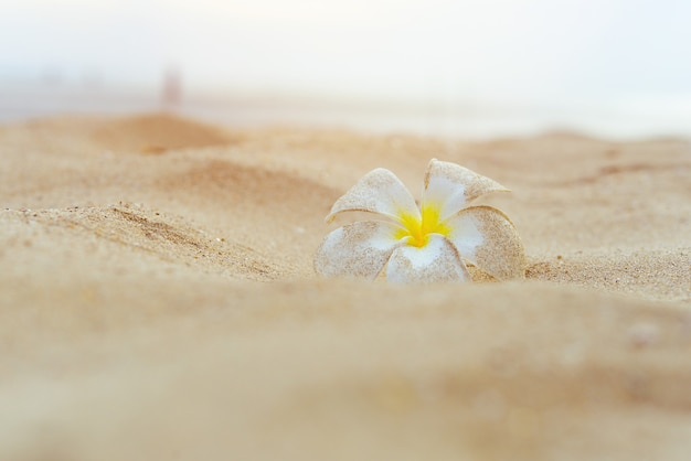 Pastel tone. white plumeria flower stain with sand on the beach.
