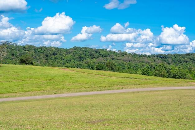 牧草地と丘の上の森と夏の青い空 Premium写真