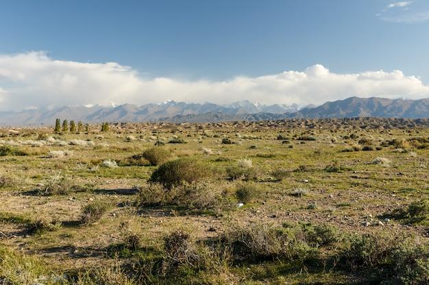 山の牧草地