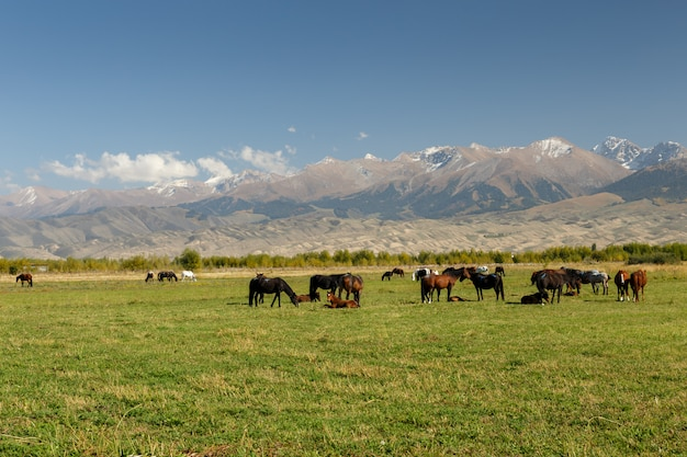 Pasture in the mountains, horses graze in a green meadow