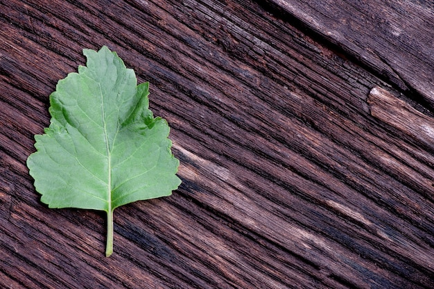 パチョリまたはpogostemoncablin、古い木の表面の緑の葉。上面図、フラットレイ。