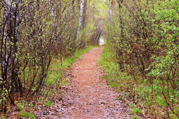Path among trees. spring landscape. natural tunnel