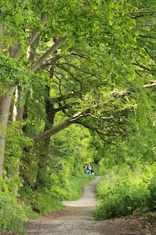 森の中の小道と背の高い木