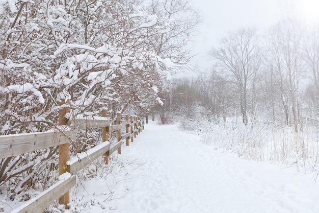 겨울 숲에서 경로입니다. 얼어붙은 나무 사이를 달리는 겨울 도로. 태양의 마법 광선이 나무 가지에 떨어집니다.