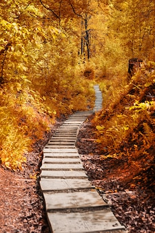 Path in the autumn forest. autumnal scene in the park.