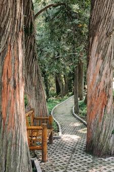 여름에 공원이나 숲에서 큰 오래된 나무 사이의 경로