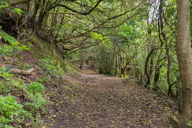 Path to chinamada, anaga massif, tenerife.