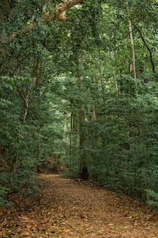A path in the dense jungle. natural reserve. the sun doesn't break through the trees.