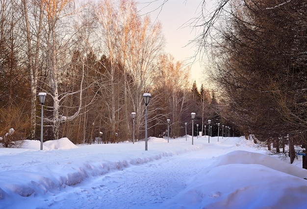 A path in a deserted winter park lanterns among the blue drifts of snow go into the distance